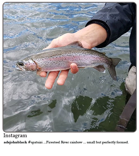 #Spatsizi - Firesteel river rainbow ....small but perfectly formed.