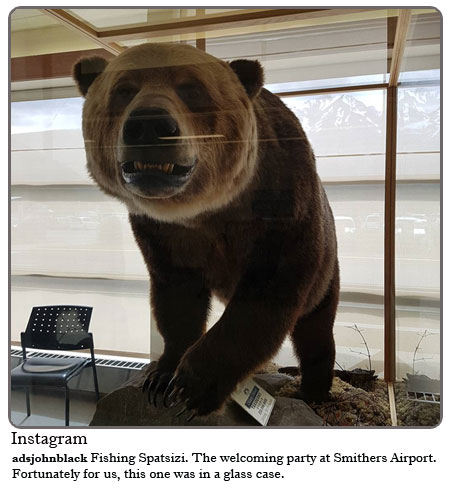 The welcoming party at Smithers Airport. Fortunately for us, this one was in a glass case.